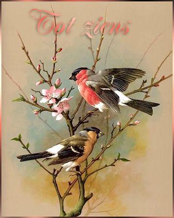 bloesem+vogels+tz+.…